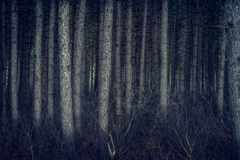Ottawa_Ontario_Woodroffe-Forest
