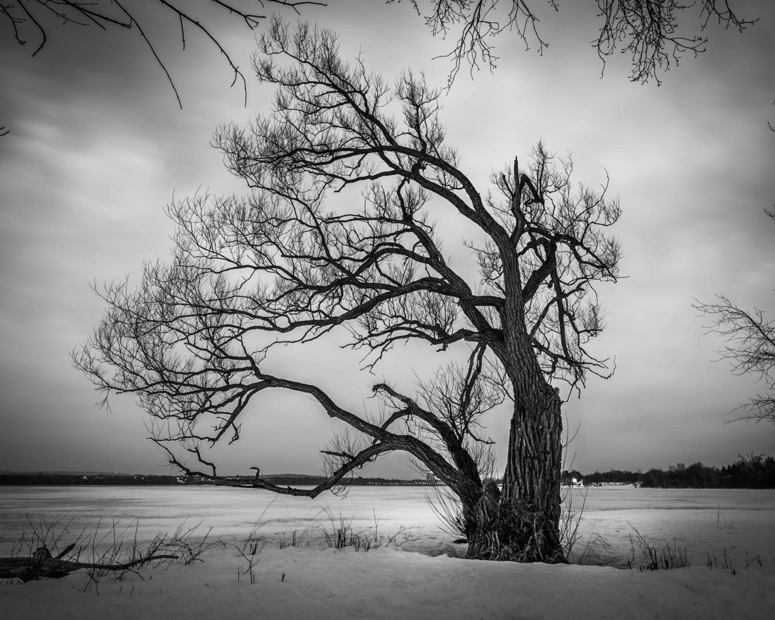 Ottawa-River_Ottawa_Ontario_Tree